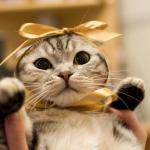 猫_プレゼント